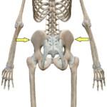 骨盤の高さの違い