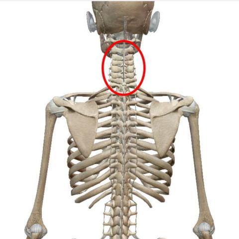 頸椎(けいつい)
