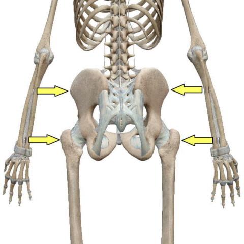 骨盤の開き具合